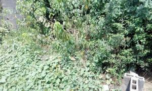 Land for sale A Land Property At Way Bridge Axis, Owode AREA- 453 - 758 SQ. METRES. Ikorodu Road. Behind NIPCO filling station. Near Way bridge. Obafemi Owode Lagos