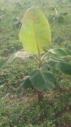 Commercial Land Land for sale Odogbolu Ogun