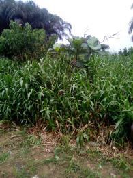 Residential Land Land for sale Egbeleukwu, Umuona Chokota along Ebele 4 Etche Rivers