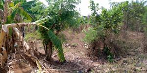 Land for sale Ayanfe block industry axis, Aule Akure Ondo