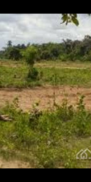 Land for sale Very close to wasimi under Ewekoro local government area.  Papalanto Ewekoro Ogun