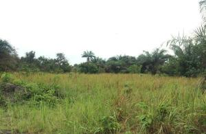 Land for sale wasimi Ewekoro Ogun