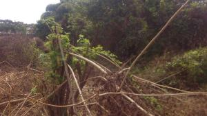 Land for sale Behind Irewole Local government Secretariat, Ikire Irewole Osun