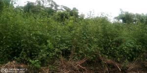 Mixed   Use Land Land for sale Mokoloki Obafemi Owode Ogun