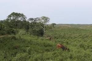 Mixed   Use Land for sale Oku Nubu, Okoafor, Badagry Oko Afo Badagry Lagos