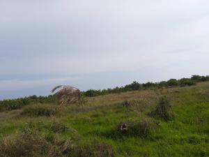 Mixed   Use Land Land for sale Diamond Estate Shibiri close to alaba int'l market Alaba Ojo Lagos