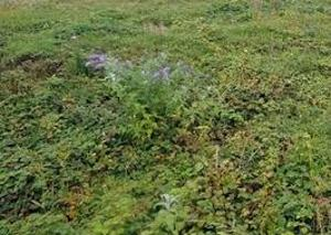 Residential Land Land for sale Ido Gwari District Phase 2 Abuja