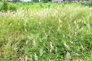 Land for sale   Ikeja GRA Ikeja Lagos