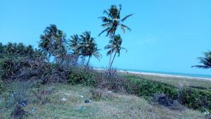 Serviced Residential Land Land for sale Cherry wood Along Lekki Free Trade zone Lagos Free Trade Zone Ibeju-Lekki Lagos