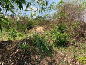 Mixed   Use Land Land for sale Behind Wichtech, Okpanam, Asaba.  Asaba Delta