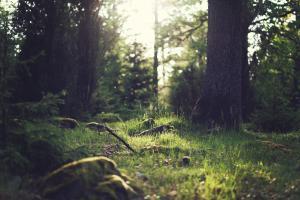Land for sale Araromi Ibese Yewa North Yewa Ogun