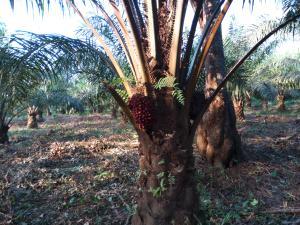 Land for sale Umuekwunne Ngor Okpuala Lga Imo State Ngor-Okpala Imo