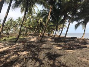 Mixed   Use Land Land for sale Itamaru village Free Trade Zone Ibeju-Lekki Lagos