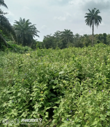 Mixed   Use Land Land for sale -  Irewole Osun