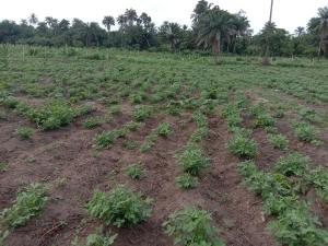 Commercial Land Land for sale Westagro Farm land in Remo Ode Remo Remo North Ogun