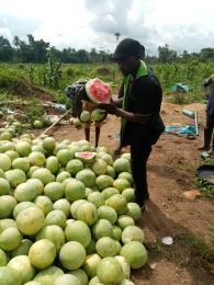 Industrial Land Land for sale West Agro Farmland  Ode Remo Remo North Ogun