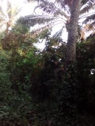 Land for sale Olokuta village Ikire, Irewole local government,Osun state. Irewole Osun