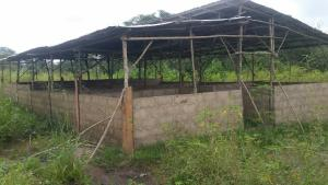 Mixed   Use Land Land for sale Maami village, near Ogbomosho town.  Surulere(Oyo) Oyo