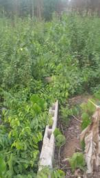 Land for sale Ota Community Ogun State Ota-Idiroko road/Tomori Ado Odo/Ota Ogun
