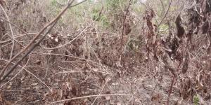 Residential Land Land for sale Amuloko, Area Omi Adio Ibadan Oyo
