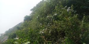 Residential Land for sale Eleyele/ologuneru Eleyele Ibadan Oyo