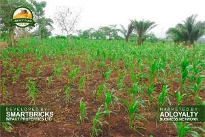 Commercial Land Land for sale Mokoloki via Mowe - Ofada , Impact Farm Stead Estate. Ofada Obafemi Owode Ogun