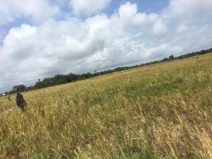 Land for sale Ibeju Lekki Free Trade Zone Ibeju-Lekki Lagos