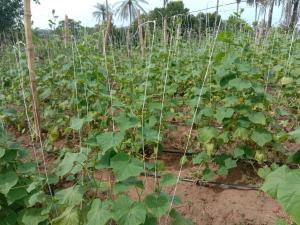 Commercial Land Land for sale Abatan Village Close to Remo, Along Ajebo Fidiwo Road Ajebo Obafemi Owode Ogun