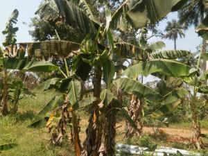 Tank Farm Commercial Property for sale Iperu Ikenne Remo North Ogun