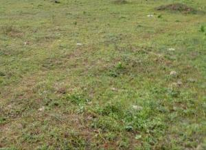 Mixed   Use Land Land for sale Sunnyfield Estate Oko Afo Badagry Lagos