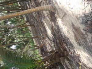 Land for sale La campagne tropicana beach resort axis Akodo Ise Ibeju-Lekki Lagos
