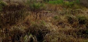 Mixed   Use Land Land for sale Kujama Main Expressway Chikun Kaduna