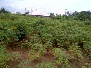 Land for sale Urhue Community, off Ekewan Road Oredo Edo