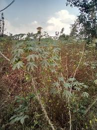 10 bedroom Mixed   Use Land Land for sale Ezinator town Awka South Anambra