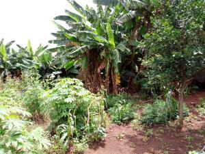 Land for sale Igboefun Jakande Lekki Before Chevron, Lekki Phase 1, Lekki, Lagos Igbo-efon Lekki Lagos