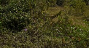 Land for sale Near Murtala Muhammed Airport  Airport Road(Ikeja) Ikeja Lagos