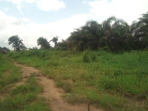 Mixed   Use Land Land for sale Igwuruta, rivers state  Ikwerre Rivers
