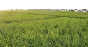 Mixed   Use Land Land for sale Karsana Abuja