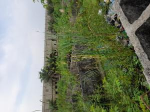 Land for sale Back of shoprite opposite royal Court estate  Sangotedo Ajah Lagos