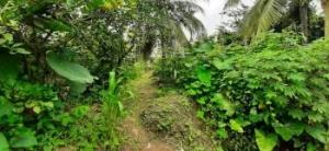 Residential Land Land for sale Behind Dakkada Secreteriate Uyo Akwa Ibom