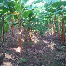 Land for sale Off lagos ibadan express way Ogun state Ode Remo Remo North Ogun