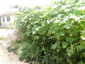 Residential Land for sale Ogbamu Village, Eniosa Area Off Olorunda Abaa Eniosa Ibadan Ibadan Oyo