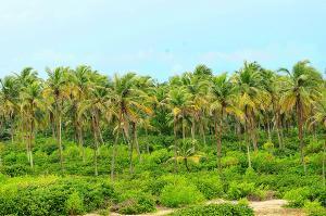 Commercial Land Land for sale Ilashe Island Ojo Ojo Lagos