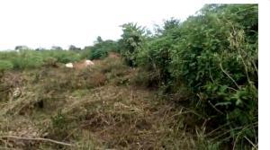 Mixed   Use Land Land for sale Beside Benson Idahosa University, after by pass flyover, off Sapele Road Ukpoba Edo
