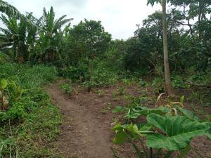 Mixed   Use Land Land for sale Kay farm Estate Iju Lagos