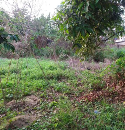 Residential Land Land for sale low cost housing estate Ughelli North Delta