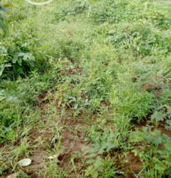 Residential Land Land for sale behind specialist hospital ajegunle  Ilorin Kwara
