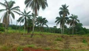 Land for sale Magbon Town Agbara Agbara-Igbesa Ogun