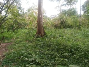 Residential Land Land for sale Emiloro community, Oda town, Akure Akure Ondo