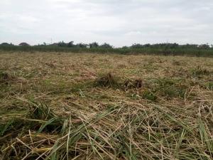 Residential Land Land for sale Alasia Town, Ajah Olokonla Ajah Lagos